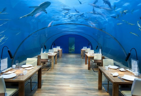 The Most Unique Dining Experiences, Ever!